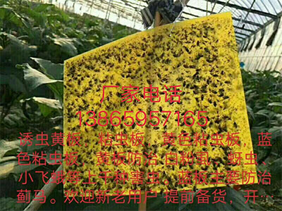 zhan虫板